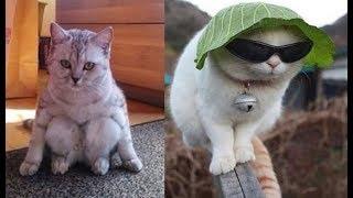 Tan chảy với những chú mèo dễ thương - Clip mèo hài hước bá đạo nhất