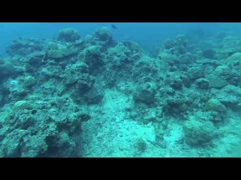 Vie sous marine Vanuatu