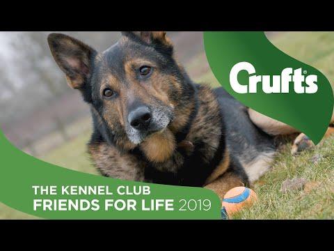 David & Finn - Kennel Club Friends For Life 2019