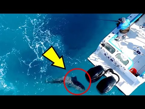 5 Sea Monsters Caught  ATTACKING a Boat!