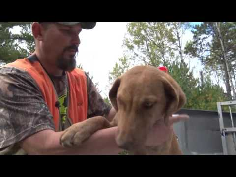 Discovering - Trapping Prep, Grouse Hunting, Kids Shooting
