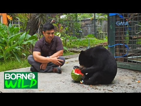 Born to Be Wild: Doc Ferds gives medical assistance to abused animals