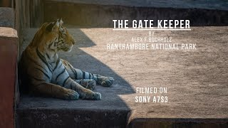 Bengal Tigers   Ranthambore National Park   Sony A7S3   Wildlife Film by Alex F Buchholz