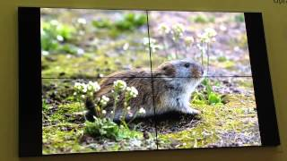 Никита Овсянников, Фото и видеосъемка диких животных Арктики  часть-1