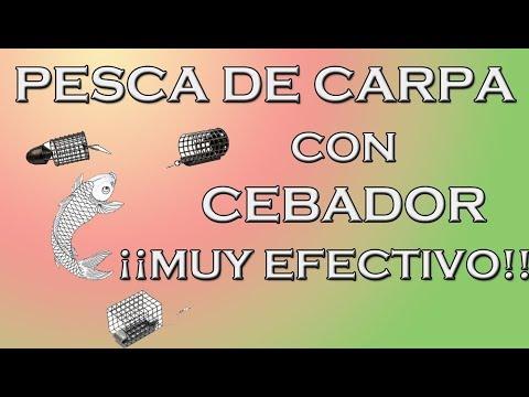 PESCAR CARPAS CEBADOR. FÁCIL Y EFECTIVO