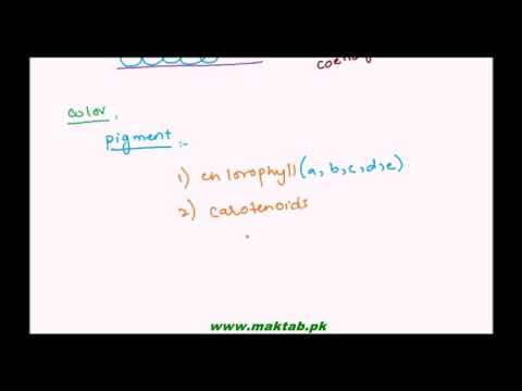FSc Biology Book1, CH 07, LEC 5: Algae and its Characteristics