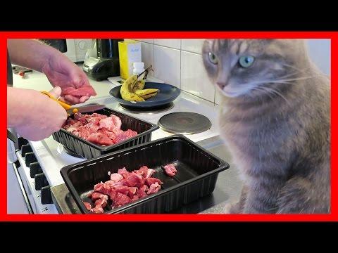 BARF dla psa i kota: wprowadzanie, składniki, przykładowy jadłospis