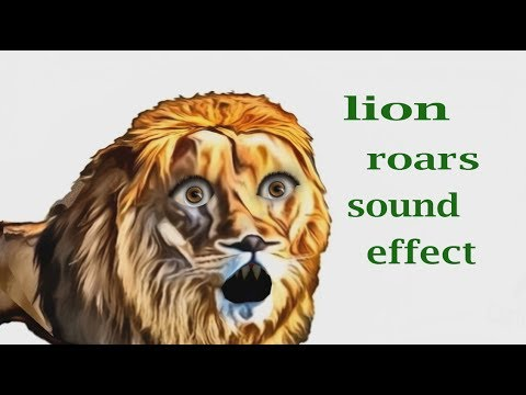How A Lion Roars - Sound Effect - Animation - YouTube - photo#16