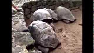 One Day In A Zoo With The Tortoise Family Pack