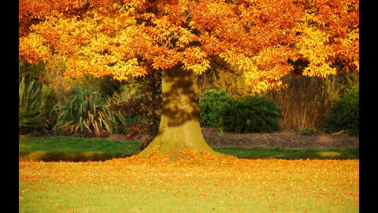 скачать осень на рабочий стол-картинку