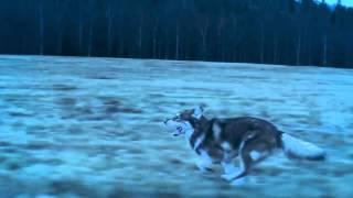 LALEH - Stars Align Style Of Eye Remix (VIDEO)