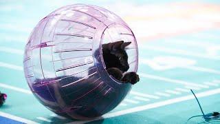 Cat-letes of the Week - Twinkles & Sprinkles - Episode 3 thumbnail