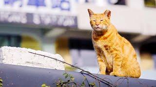 Массово покидая дома, люди оставляли своих кошек на улице, но питомцы выжили и спасли целый город