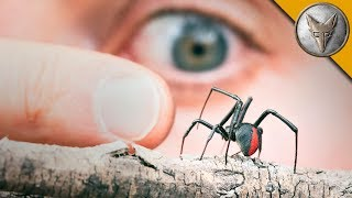 MORE DANGEROUS than a Black Widow?!
