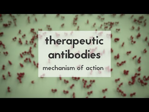 Therapeutic antibodies (Part 2): mechanism of action