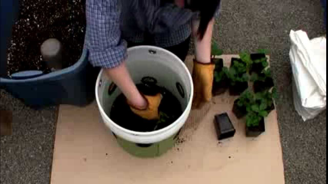 Strawberry Planting With The Ultimate Bucket Youtube