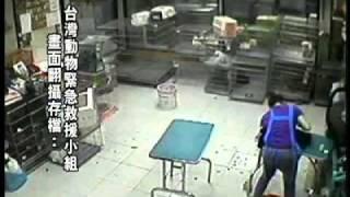 動物救援小組 寵物美容業者遭訴疑打狗又讓狗跌落美容桌摔死 存檔用