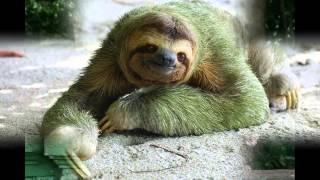 смешные рисунки животных, видео приколы с животными.