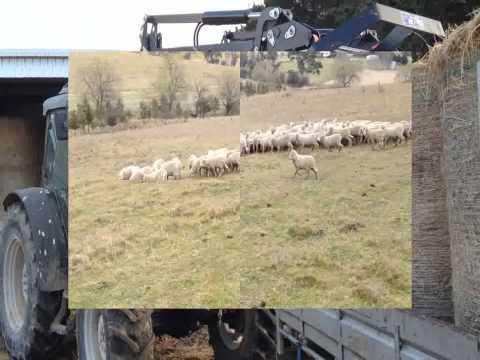 Australia Farm Trip!!! YASS~~~~ - yass