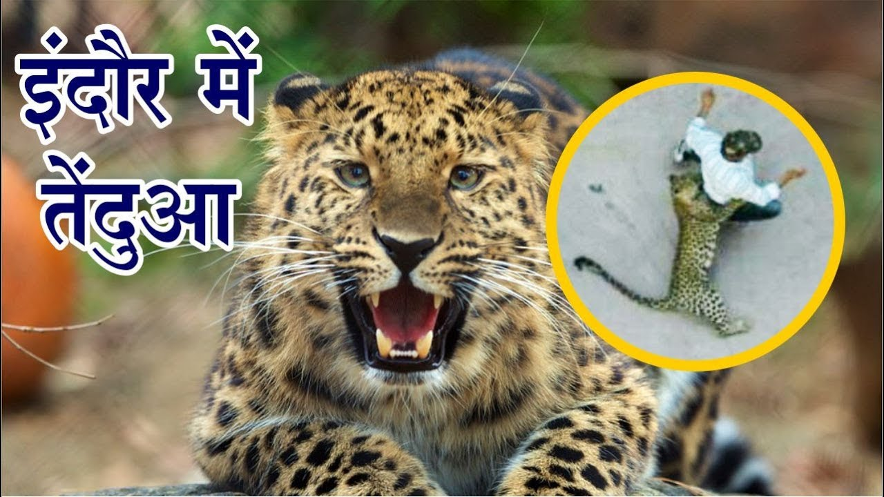 Leopard Found In Home At Palhar Nagar | Indore | Talented India News
