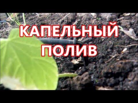 видео: КАПЕЛЬНЫЙ ПОЛИВ , УСТРОЙСТВО И ЭКСПЛУОТАЦИЯ