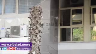 قطع الأشجار بشارع عبد المنعم رياض بالمهندسين.. فيديو وصور