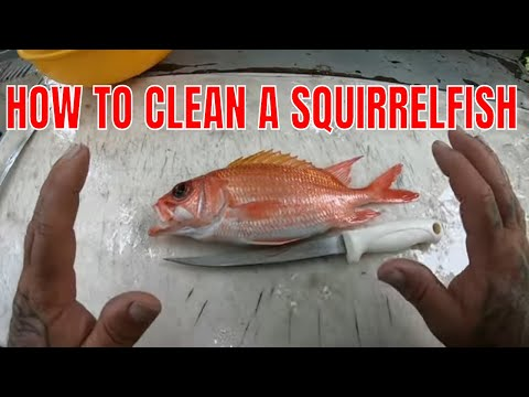 HOW TO CLEAN A Squirrelfish