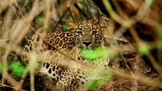 Bhadra Wildlife Sanctuary in Karnataka I Documentary by Karnataka Forest Department I