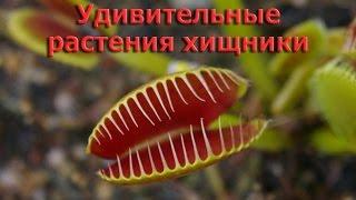 Удивительные растения хищники