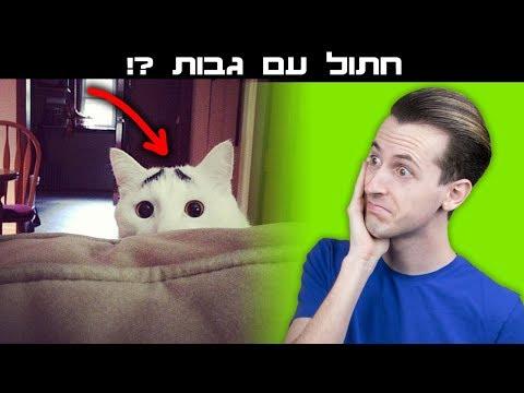 חתולים שישאירו אתכם בהלם