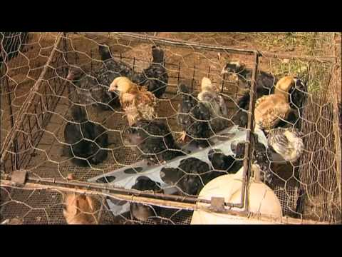 Shamba Shape Up Sn 05 - Ep 24 Chicken, Post Harvest Losses, Nutrition (English)
