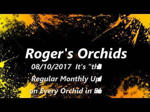 """It's """"the 8th"""" - Regular Monthly Update on Every Orchid in Bloom"""