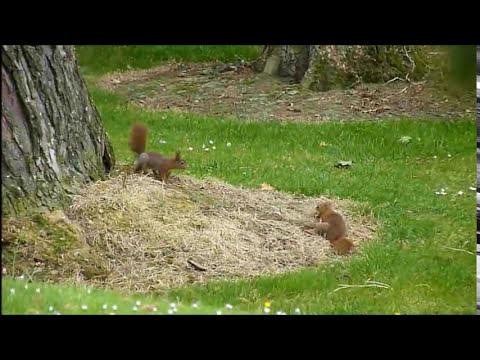la vie des écureuils
