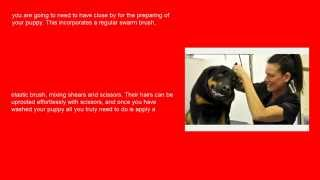 Professional Rottweiler Grooming Tips | Tips And Tricks Grooming Rottweilers