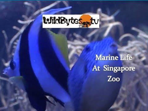 Marine life, Singapore zoo
