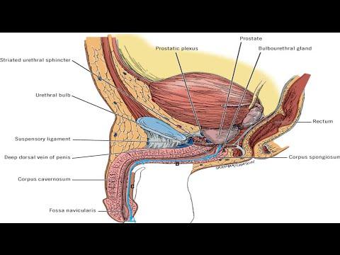 carcinoma penis part1