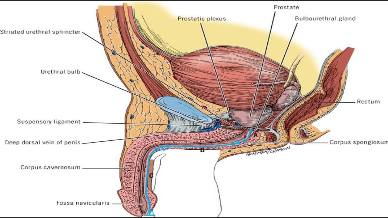 Carcinoma Penis Part1 Youtube