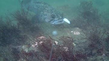 갯바위 수중입질