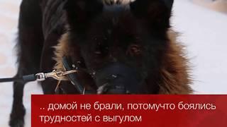 Шарлотта собака из приюта Красная Соснаhttps://vk.com/sharlotta.help
