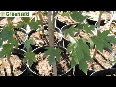 Каталог садовых растений