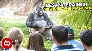 Ketika Hewan Berkomunikasi dengan Manusia, Begini Pesan Menyentuh dari Koko Gorilla..