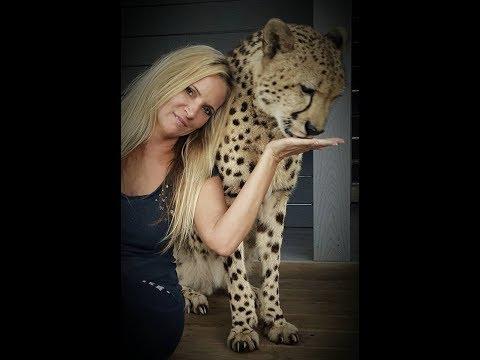 Charlie Cheetah Purr