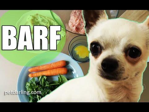 como poner a dieta a un perro chihuahua