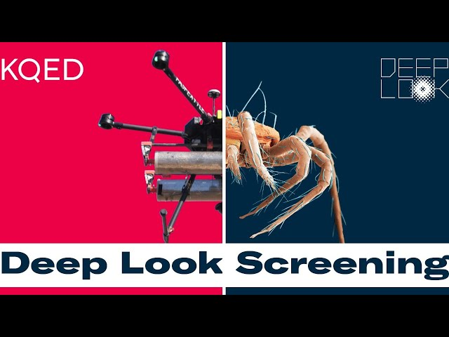 From Mites on Drones to Deadly Mushrooms – A Deep Look Screening and Q&A
