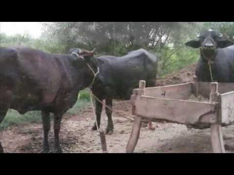 Bio Gas Plant and Organic Ferlizers in a village of Khanewal 6 Oct 2013 Pakistan   HD 720p Video Sha