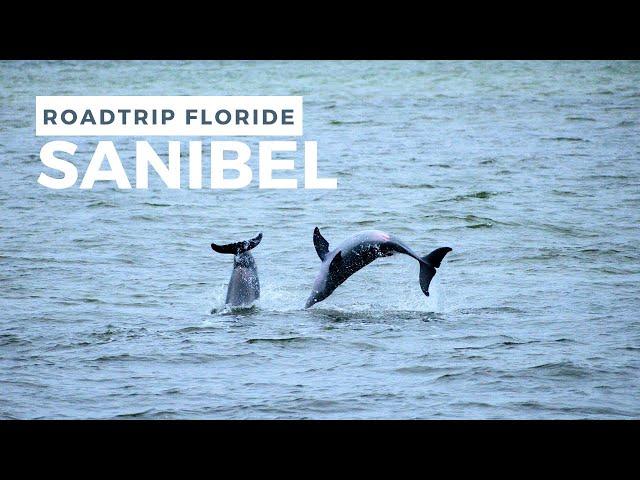 DAUPHINS et 10°C à SANIBEL Island 🥶 - ROADTRIP Floride #3