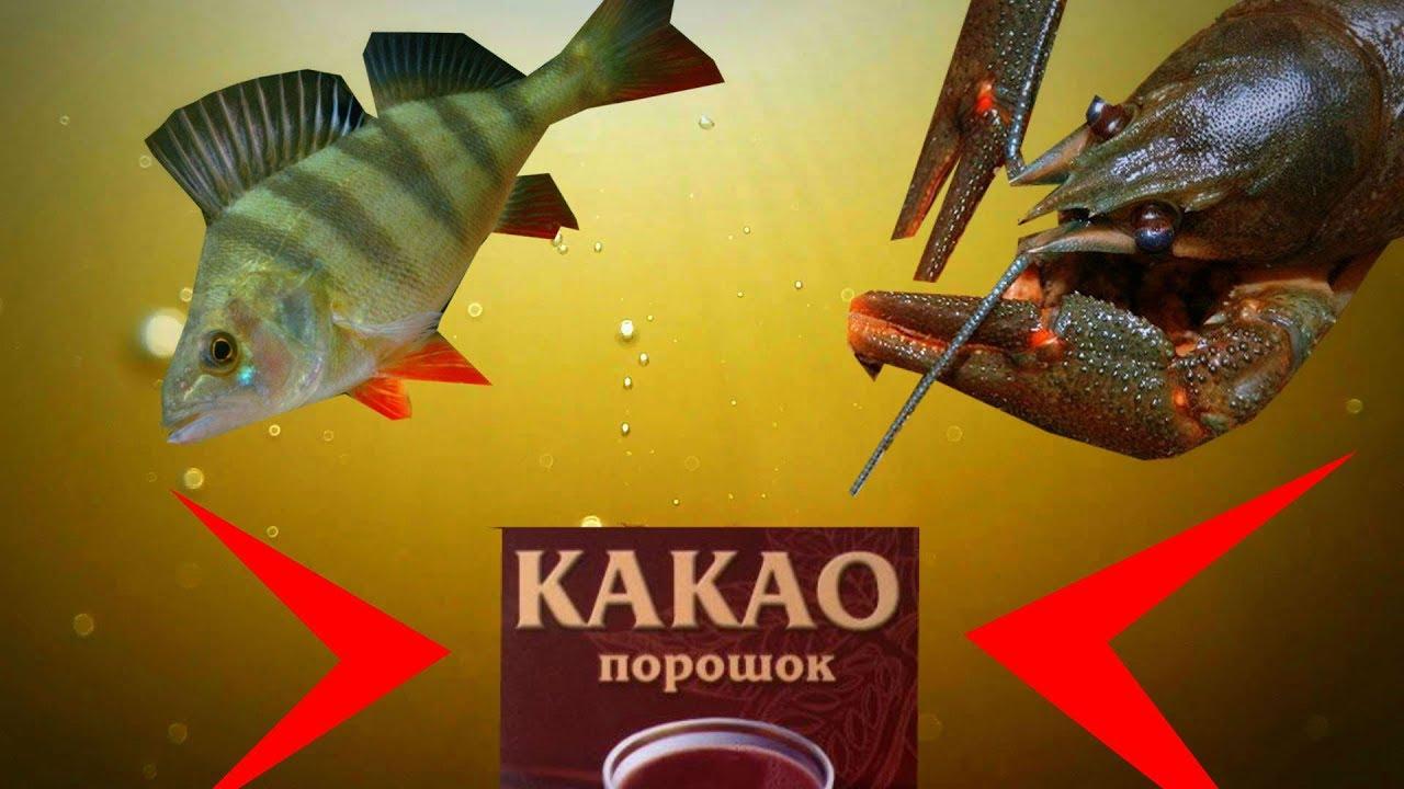 Реакция рыбы на КАКАО! Подводная съемка