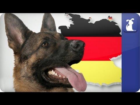 Doglopedia - German Shepherd