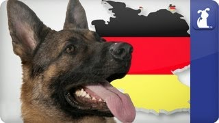 Doglopedia - German Shepherd
