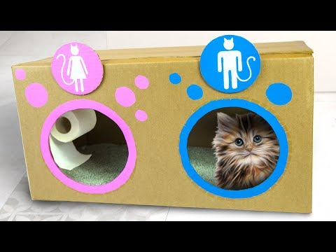 Thumbnail: DIY Cat Toilet | Craft Ideas for Kids on Box Yourself